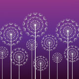 Purple background with white dandelions Stock Images