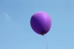 Purple balloon Stock Images