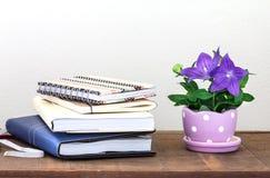 Purple balloon flower or Platycodon grandiflorus flower in cute Royalty Free Stock Image