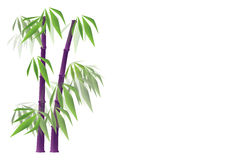 Purple bamboo. Vector illustration on purple bamboo with leaves on white background. The illustation is available in eps Stock Photography