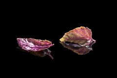 Purple basil on black background. royalty free stock image