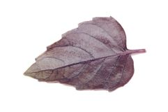 Purple Basil Leaf Stock Image