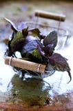 Purple basil Stock Image