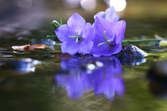Purple beautiful flowers Royalty Free Stock Images