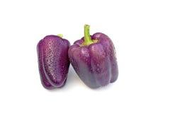 Purple Beauty Pepper stock photography