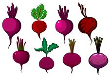 Purple beets vegetables with stalks and leaves Stock Images