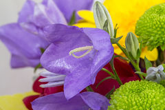 Purple bell flower in a bouquet Royalty Free Stock Photo