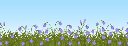 Purple bell flowers in green grass on a blue sky background. Seamless border. Purple bell flowers in green grass on a blue sky background. Border. Spring flowers Stock Photo