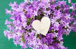 Purple bellflowers Stock Photos