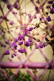 Purple berries. And purple wire Royalty Free Stock Photo