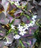 Purple blooms Stock Photo