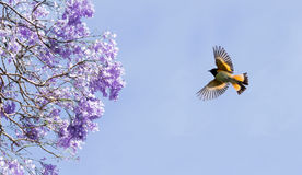 Purple blossom and bird flying in blue cloudy sky Stock Photo