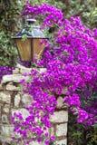 Purple blossom Stock Photography