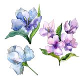 Purple and blue alstroemeria flowers. Floral botanical flower. Isolated illustration element. Aquarelle wildflower for background, texture, wrapper pattern Royalty Free Stock Image