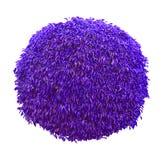 Purple blue ball shaped bush isolated on white background royalty free stock photography
