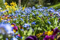 Purple and Blue Flowers Royalty Free Stock Photography