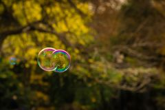 Purple Blue and green bubbles floating near an autumn background. stock photography