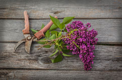 Purple-blue lilac and secateurs on a wooden  table Stock Images