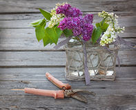 Purple-blue lilac and secateurs on a wooden  table Stock Image