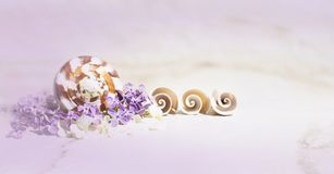 Seashells, lilac and white small flowers in a purple haze on travertine background. royalty free stock photos