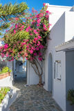 Purple Bougainvillea in front of a typical white Greek house in Stock Photos