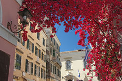 Purple bougainvillea in a mediterranean town Stock Images