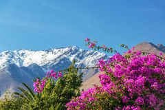Purple Bougainvillea and Mountains Royalty Free Stock Images