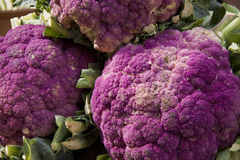 Purple broccoli Royalty Free Stock Image
