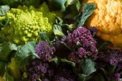 Purple broccoli Stock Photo