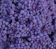 Purple broccoli macro Stock Image