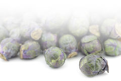 Purple brussel sprouts  Stock Photo