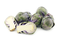 Purple brussel sprouts Royalty Free Stock Photo