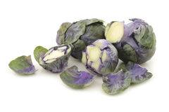 Purple brussel sprouts Royalty Free Stock Photography