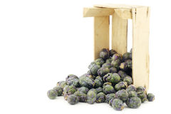 Purple brussel sprouts in a wooden crate Stock Photography