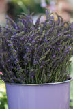 Purple Bucket of Fresh Lavender Royalty Free Stock Image