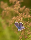 Purple butterfly. Small purple butterfly on grass stock photography