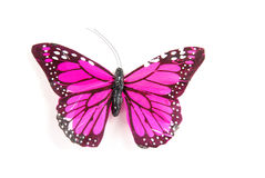 Purple butterfly. A purple butterfly on a white background stock photography