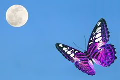 Purple butterfly Royalty Free Stock Photography