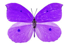 Purple butterfly Stock Photos