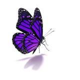 Purple butterfly stock photo