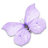 Purple butterfly. Isolated on white background royalty free stock image