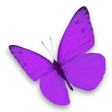 Purple butterfly. Isolated on white background stock photo