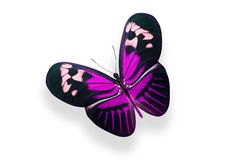 Tropical purple butterfly. on white background. Purple butterfly. on white background stock photos