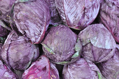 Purple cabbage Stock Photos