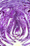 Purple cabbage Stock Images