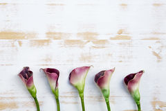 Purple calla lilies on white wooden background Stock Photo
