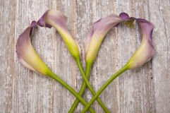 Purple Calla Lily. On a Rustic Old Piece of Wood Stock Image