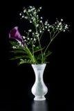 Purple calla lily over black Royalty Free Stock Photo