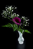 Purple calla lily over black Stock Photography