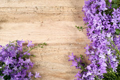 Purple campanula  blue bell flowers on wooden background Stock Photo